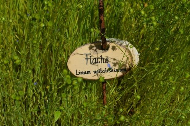 as_flachs_luggau1402